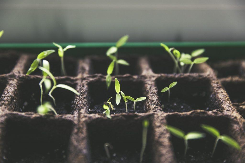 Kräftige Jungpflanzen, Saatgut & Bio-Erde